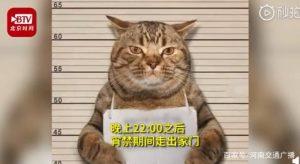 """泰国""""社会猫  """"因违反外出禁令被逮捕 网友看后表情都笑了"""
